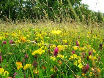 STRI Research Operation Pollinator Trial 2011